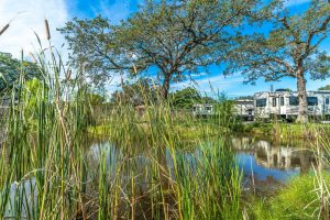 Plantation Oaks RV Park pond